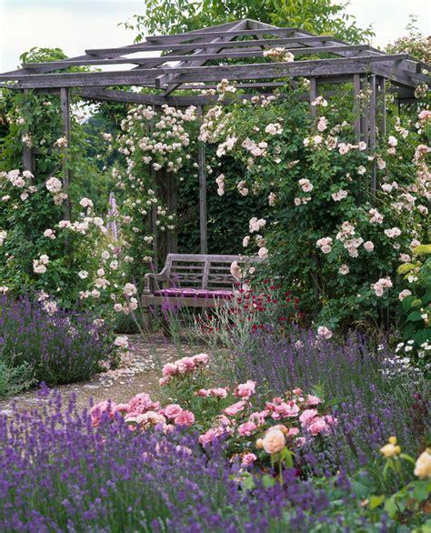 les rosiers grimpants rosier d 233 coratif roseraie guillot