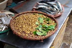 Maden Im Müll : hausmittel gegen maden richtig anwenden ~ Markanthonyermac.com Haus und Dekorationen