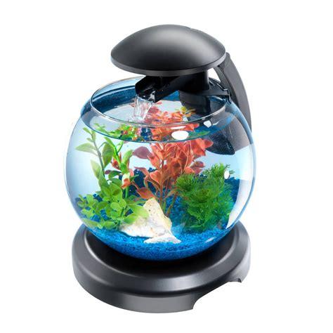 poisson pour aquarium boule