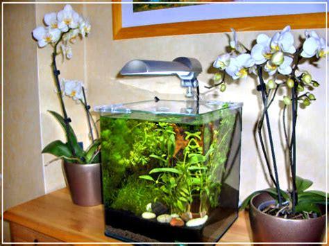 am 233 nagement d 233 coration d aquarium eau douce