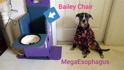 megaesophagus using bailey chair