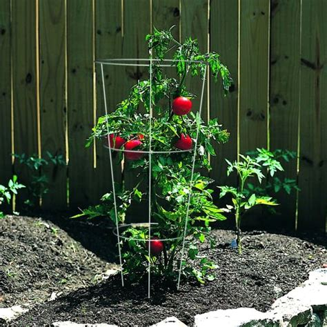 Plant Support Cage Set 10 Trellis Tomato Flower Climbing