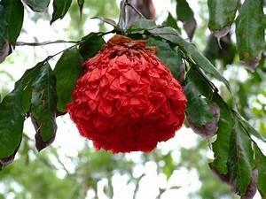Pflanzen Zu Hause : pflanzen in nanopics relax ideen f r gartengestaltung zen garten zu hause einrichten ~ Markanthonyermac.com Haus und Dekorationen