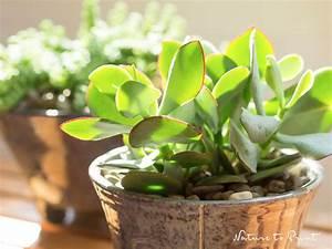 Zimmerpflanze Lange Grüne Blätter : die neue lust an zimmerpflanzen mehr als gr ne dekoration ~ Markanthonyermac.com Haus und Dekorationen