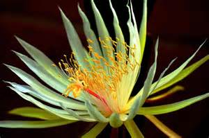 Image result for flower pictures