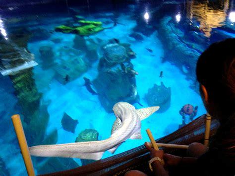shark week at sea aquarium get a free ticket