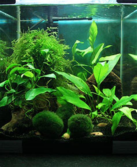 comment d 233 corer nano aquarium