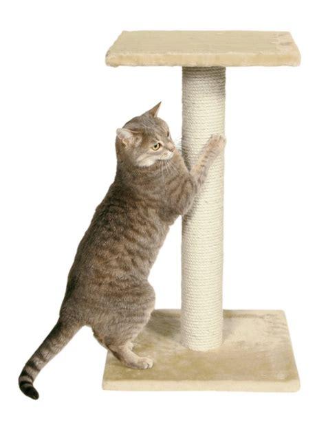 un chat persiste 224 faire ses griffes sur les meubles que faire