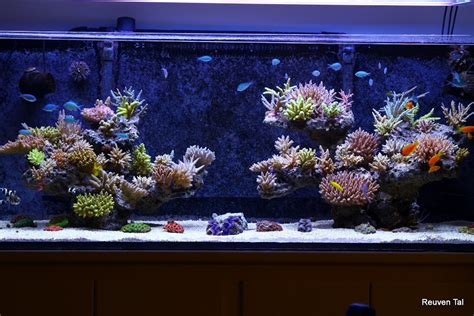 Featured Reef Reuven Tal's Reef From Israel News Reef