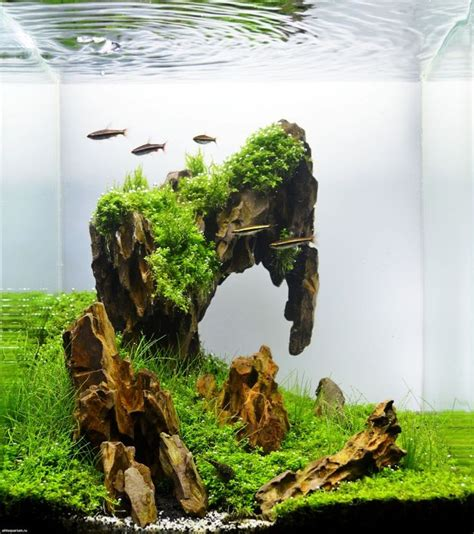 25 best ideas about aquascaping on aquarium aquarium aquascape and aquarium ideas