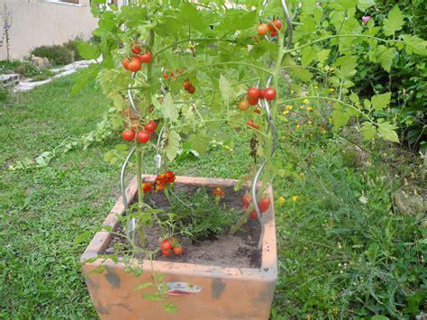 associez les tomates le basilic les salades jardiner avec jean paul