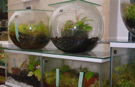 cultiver des b 233 gonias en terrarium afabego