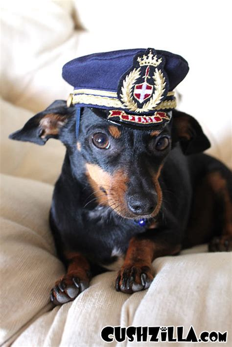 Dog Boat Captain by Captain Kitty Pilot Hat For Cats And Dogs X Small From