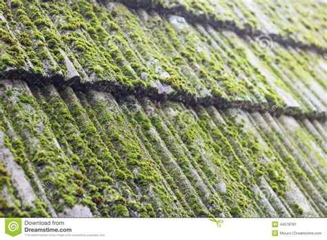 Roof Tiles And Green Tree Royalty-free Stock Photo Metal Roofing Materials Dallas Texas Per Sq Ft On The Roofs Dead Roof Heating Coils For Ice Dams Insurance Abc Midland Logo Templates Depot Forest St Denver