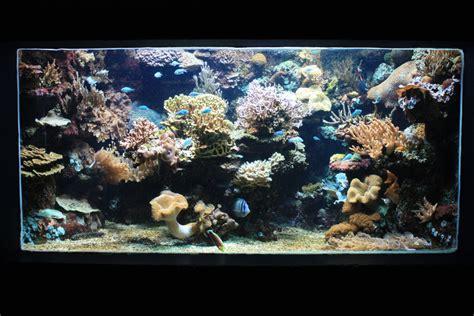 aquarium du cap d agde black hairstyle and haircuts