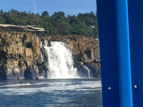 Boat Rides Portland Oregon by Willamette Falls Picture Of Willamette Jetboat