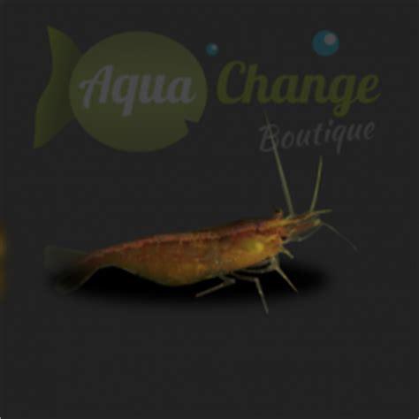 vente en ligne de crevettes d aquarium aquachange boutique