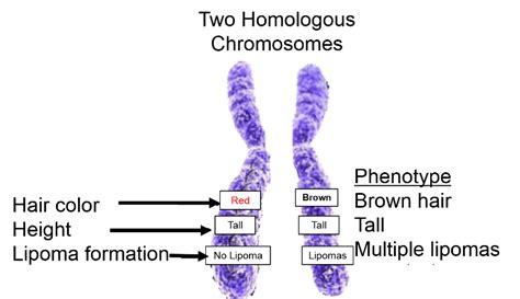 Dna, Genetics, And Evolution