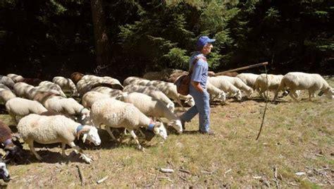 un pacte pastoral pour un patrimoine commun espaces naturels