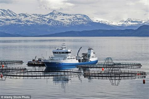 Boat Driving Jobs Abroad by Ian Birrell Norway S Not In Eu And It Does All Right
