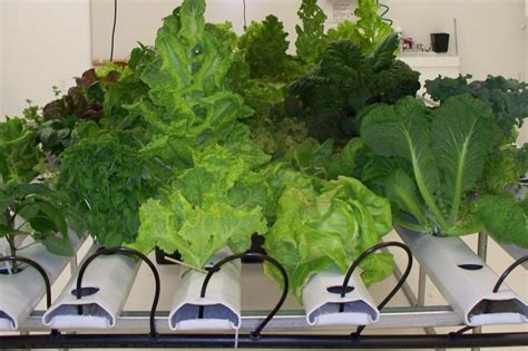Best St Indoor Garden Tips