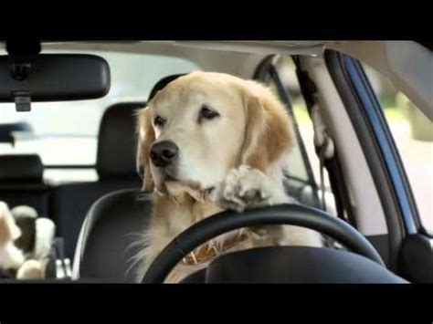Boat Dog Captions by Dog Tested Dog Approved 174 Keep Your Eyes On The Road Youtube