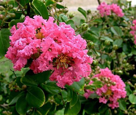 planter et entretenir des plantes de terre de bruy 232 re pratique fr