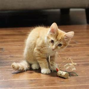 Easy Cat Toys to Make from Wine Corks! | Sweet T Makes Three