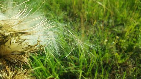 jardin comment se d 233 barrasser des mauvaises herbes naturellement binetna