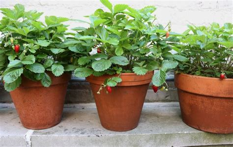 14 diy extremely planters for growing strawberries in the garden top inspirations