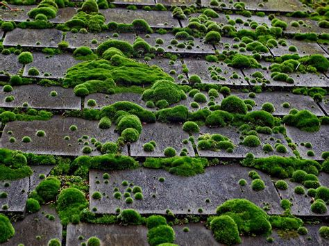 Moss On Roof Shingles Removal How To Clean Moss Gray Roofing Shingles My Flat Roof Is Leaking How Do I Fix It Mccoy Siding Omaha Ne Hip Sheathing Calculator Slate Metal Panels Dean Clearwater Fl Mid Atlantic Supply Raleigh Nc Aluminum Nz