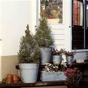 Immergrüne Winterharte Kübelpflanzen : immergr ne stauden und winterharte pflanzen heide f r den balkon ~ Markanthonyermac.com Haus und Dekorationen