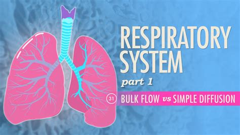 Respiratory System, Part 1 Crash Course A&p #31  Youtube. Radiology Technician Training Programs. Itil Certification Online Spring Tx Locksmith. Hampton Roads Universities Web Site Optimizer. Virtual Office In Washington Dc. Honey And Cinnamon Arthritis. Pasadena City College Tuition. Is Pumpkin Pie Good For You Ace Plumbing Sf. Hard Drive Recover Software Mac Rack Server