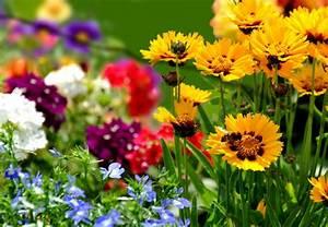 Garten Blumen Pflanzen : farben im garten blumen gekonnt arrangieren obi ~ Markanthonyermac.com Haus und Dekorationen
