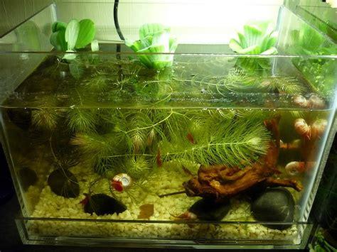 plants flowers 187 water lettuce