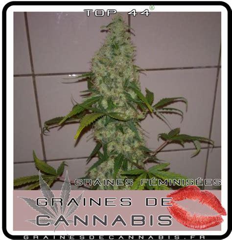 cannabis facile pour l int 233 rieur