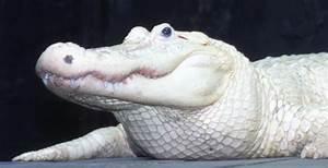 Beautiful shot of a VERY rare leucistic (not albino ...