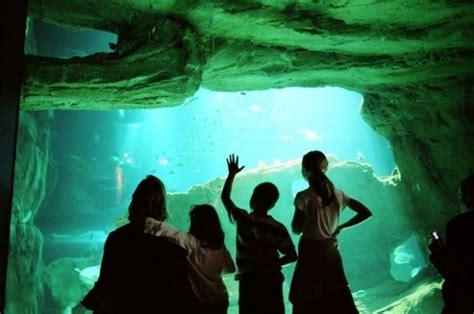 aquarium de cin 233 aqua club butterfly