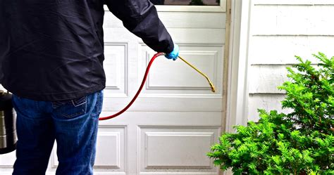 8 Great Ideas For Maintaining A Pest Free Home Themocracy