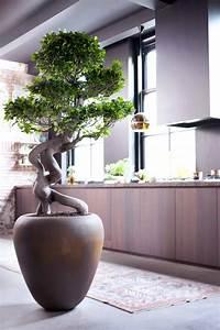 Pflanzen Zu Hause : pflanzenwunder ficus ginseng pflanzenfreude pflanzen f r zu hause pinterest bonsai ~ Markanthonyermac.com Haus und Dekorationen