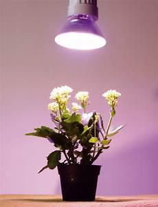 Pflanzen Led Licht : plantreflektor e27 pflanzenlampe ~ Markanthonyermac.com Haus und Dekorationen