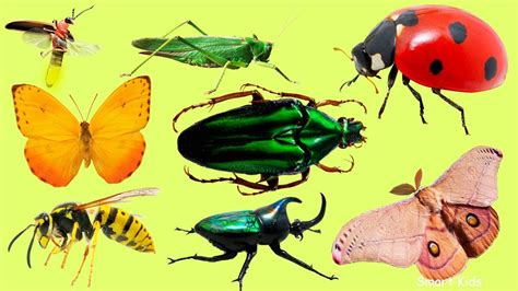 Insects For Kids  Learn Name And Sounds Of Insects For Children  Learn Insects In English