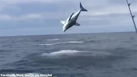 Mako Boats Mark Vi by Hooked Mako Shark Jumping Out Of Water Youtube