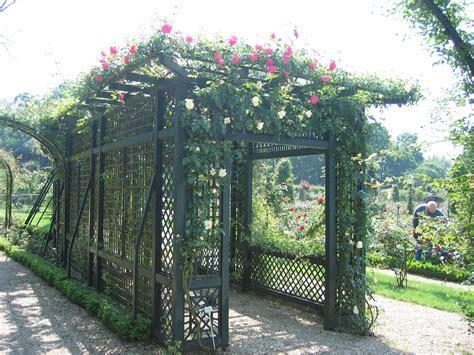 Trellises And Climbing Plants, Vines
