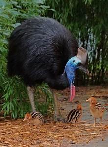 New Arrivals - Virginia Zoo in Norfolk