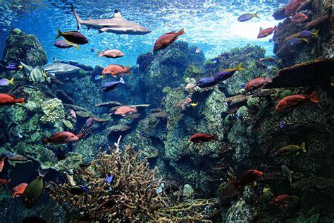 councilman invites residents to the aquarium of pacific