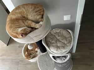 In Welche Himmelsrichtung Schlafen : er fickt sie beim schlafen ~ Markanthonyermac.com Haus und Dekorationen