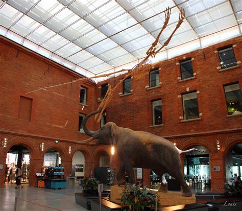 museum de toulouse photos du mus 233 e d histoire naturelle de toulouse mus 233 e toulouse occitanie