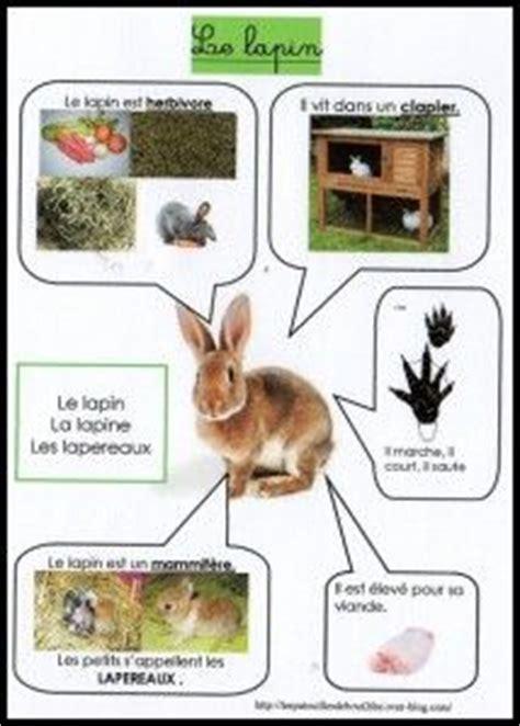 le lapin utile en p 233 riode de p 226 ques vivant animales et animaux