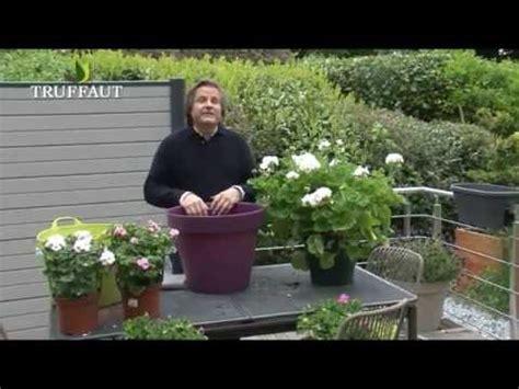 g 233 ranium en pot plantation et entretien jardinerie